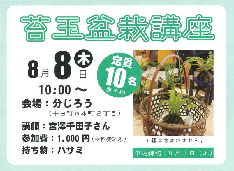 苔玉盆栽講座